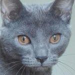 prechtl-chartreux-nostalgie-bleue-dede-galerie-07