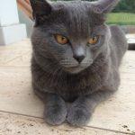 prechtl-chartreux-nostalgie-bleue-foto-galerie-15