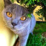 prechtl-chartreux-nostalgie-bleue-foto-galerie-20